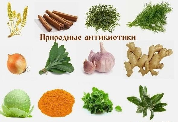 ТОП-5 лучших природных антибиотиков