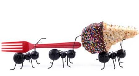 Как  вывести, избавится от муравьёв в доме