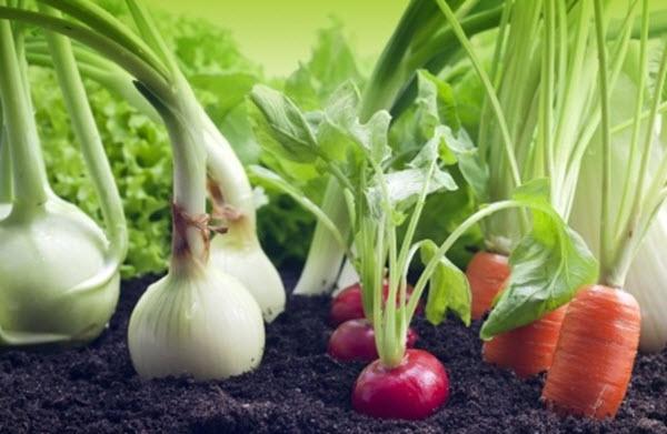 Свежие домашние овощи у вас на подоконнике!