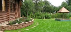 Правильный уход за газонной травой