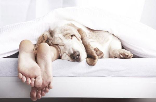 Семь предрассудков и заблуждений о сне